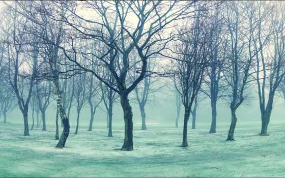 фото, лес, hello,