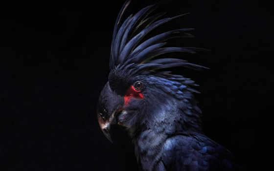попугай, black, fone