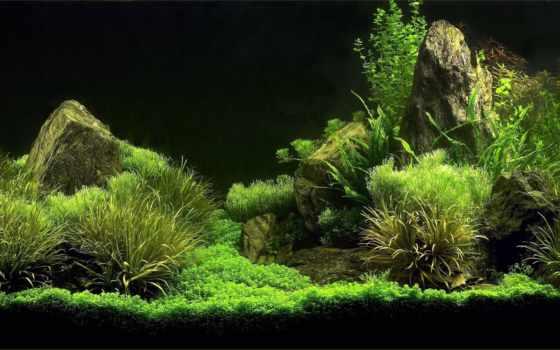 аквариум, фон, fish, музыка,