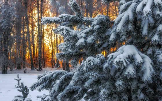 winter, лес, коллекция, skazka, картинка