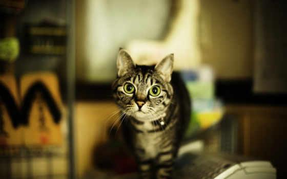кошка, взгляд