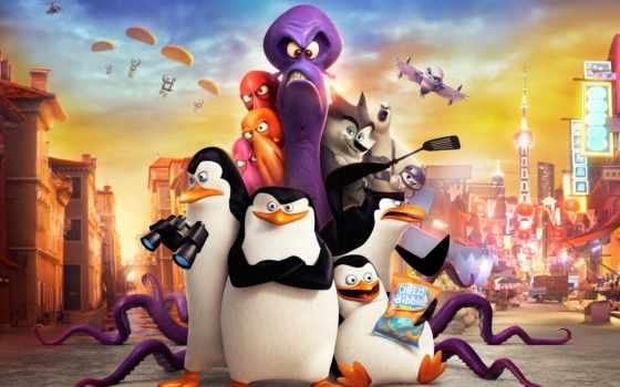 мадагаскар, penguins, пингвины Фон № 55277 разрешение 2560x1440