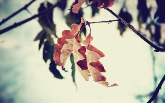 осень, osen, season