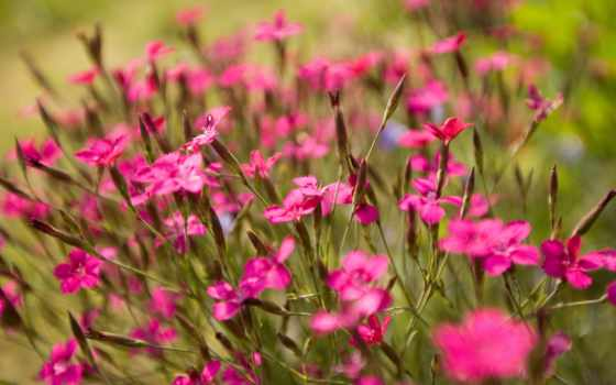 цветы, газон, поле, луг,