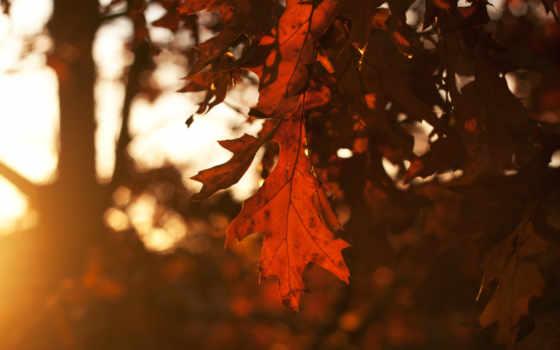 осень, листья, деревя, time, небо, года, закат, вечер, лист, дубовые, sun,