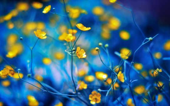 цветы, телефон, нежном