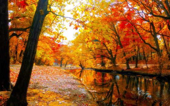 осень, bosque, papel, pantalla, naturaleza, акварели, parede, рисует, again,