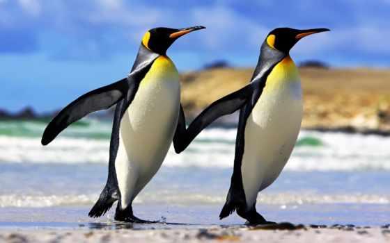 пингвины, императорские, следы, интересные, яndex, коллекциях, коллекция, dạy,