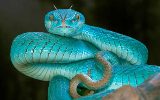 snake, blue, joom, язык, animal, цена, магазин, diamond, free, вышивка, доставка