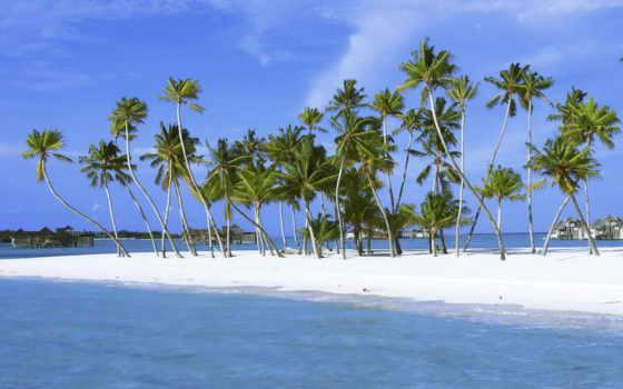 palm, island
