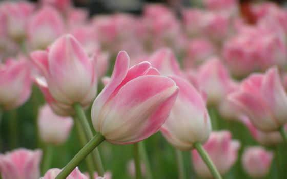 Цветы 25484