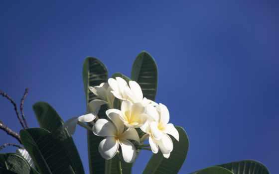 Цветы 34850