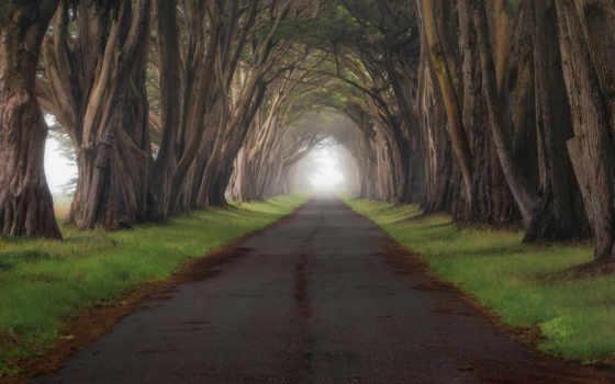 деревьев, туннели, share