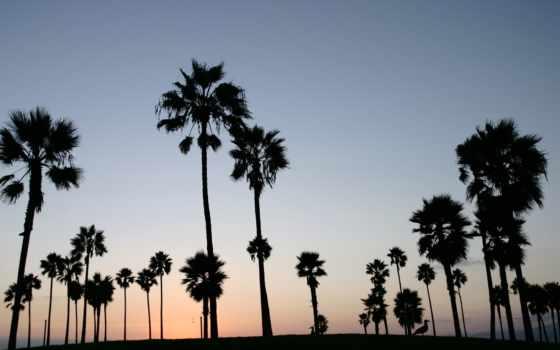 пальмы, небо, palm