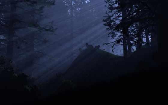 лес, свет, волки, ночь, rays,