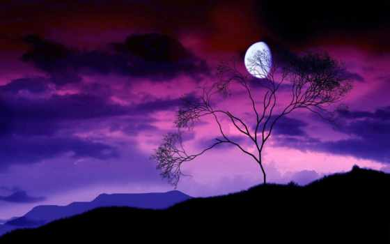 луна, заставки, ночь, очертания, природа, дерево, небо, фоны, ветви, bush, кот,