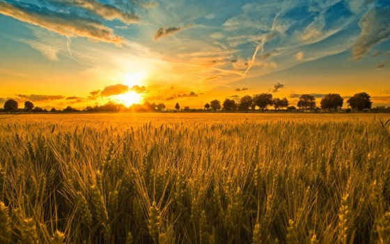 поле, закат, пшеница, со, grains, ears, rye, вечер,