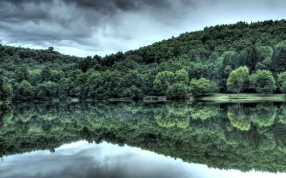 water, отражение, лес