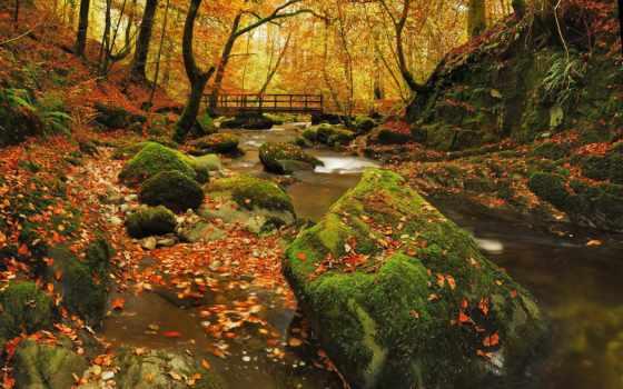 осень, landscapes, пасть, bridges, trees, листья, forests, sunlight, природа, лес, sunbeams,