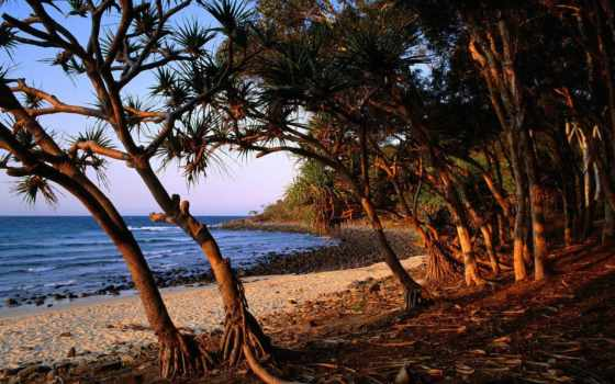 playa, para, playas, fondos, arboles, gratis, mijael,