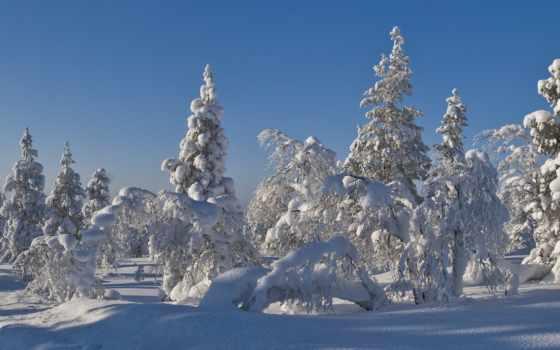 winter, christmas, снег, дерево, лес, trees, пейзажи -, ёль,