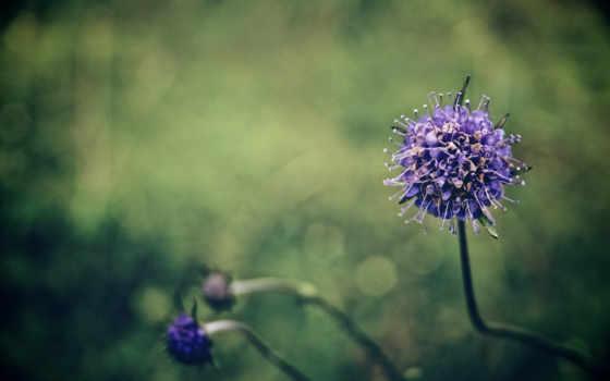 цветок, размытие