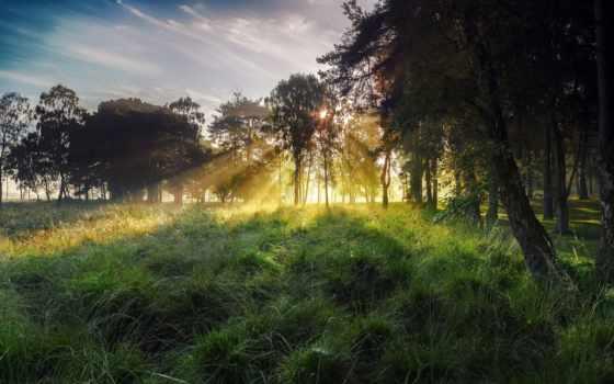 утро, sun, landscape, лес, природа, трава, rays, trees,