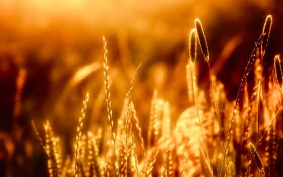 bokeh, боке, природа, sunlight, art, макро, высоком,
