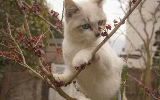 ветки, картинка, decoration, кот, год, cvety, new, winter, zhivotnye,