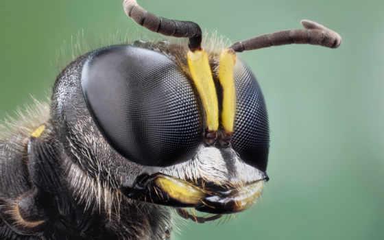 бабочка, насекомые, красивые, жук, zhivotnye, близко, яndex, card, насекомое, макро,