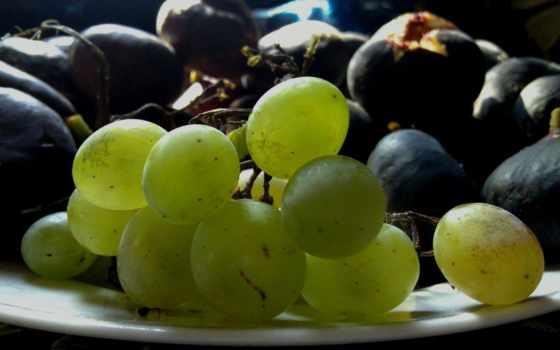 плоды, you, можно, file,