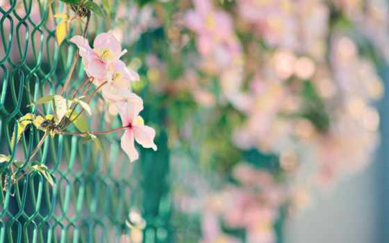 cvety, природа, android, розовый, flowers, боке, красивые,