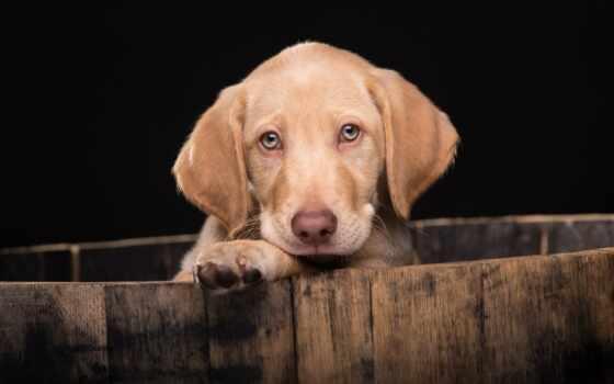смотреть, щенок, собака, cute, tapety