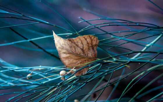 природа, shirokoformatnyi, красивый, makryi, лист, ноутбук, осень