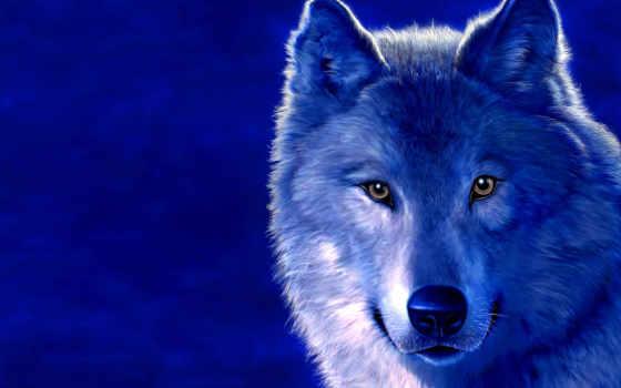 волки, волк