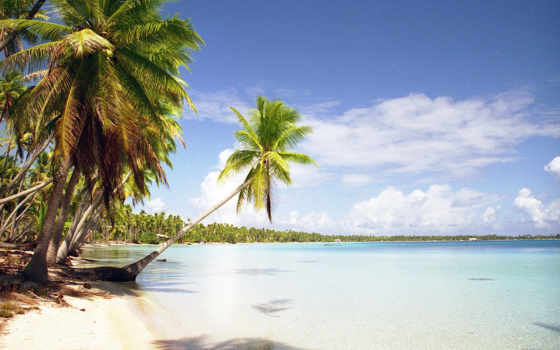 пляж, пальмы, тропики