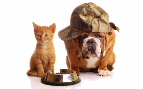 собака, кот, собаки Фон № 58724 разрешение 4160x2600