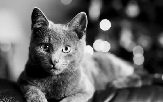 кошки, чёрно, белая
