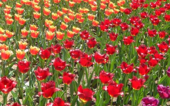значок, flowers, весна