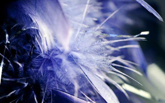,перья, букет, голубой,