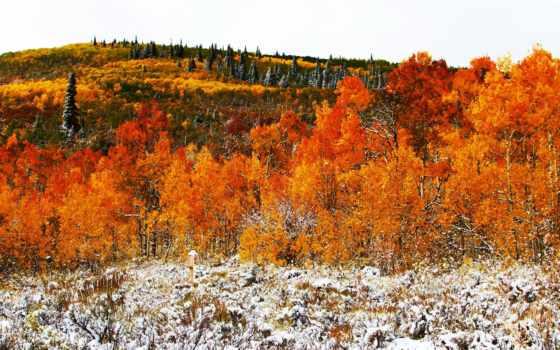 осень, desktop, лес, тегом, коллекция, unbelievable, plochu,
