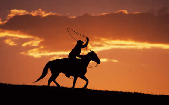 rodeo, rodeio, caballos,