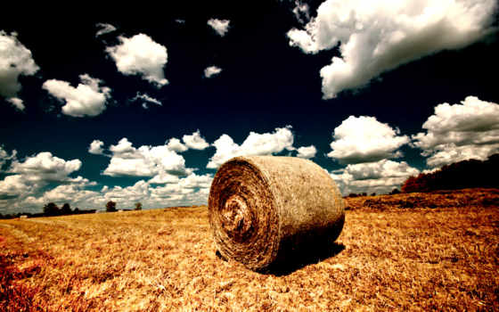 поле, природа, ферма, зелёный, лошадь, farming, landscape, lone, дерево, tractors