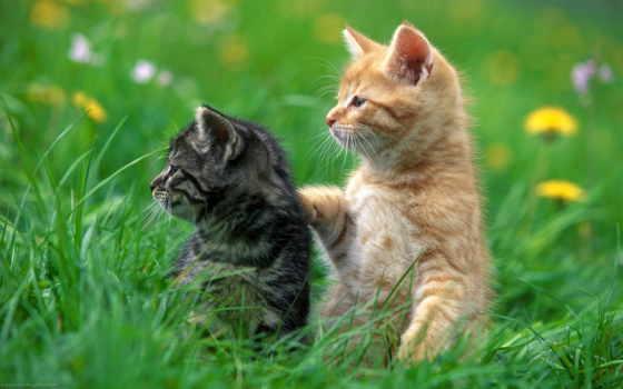 красивые, кошки, бесплатные