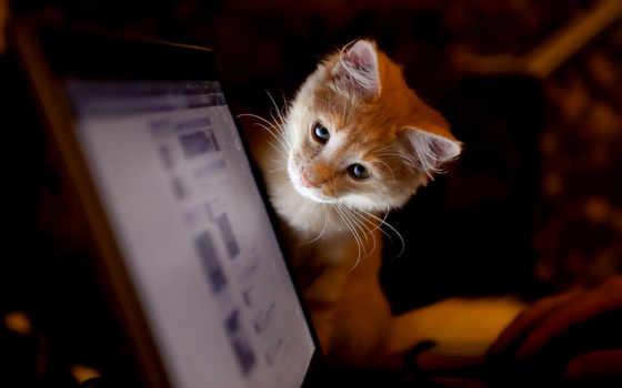 фотографии, кошек, показать