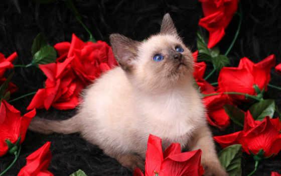 котенок, zhivotnye, кошки