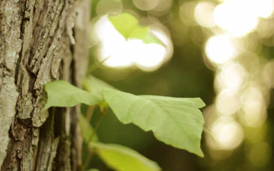 дерево, кора, file, you, можно,