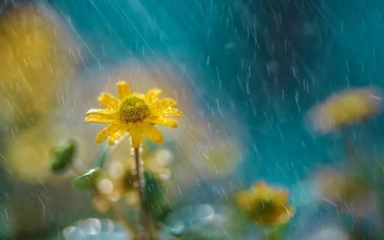 дождь, cvety, природы