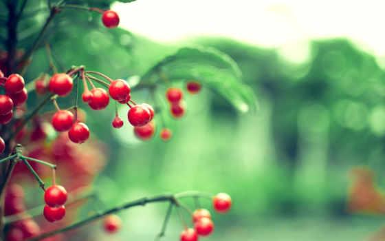 cherries, wild, galaxy