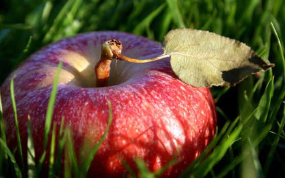 apple, яблоки, траве